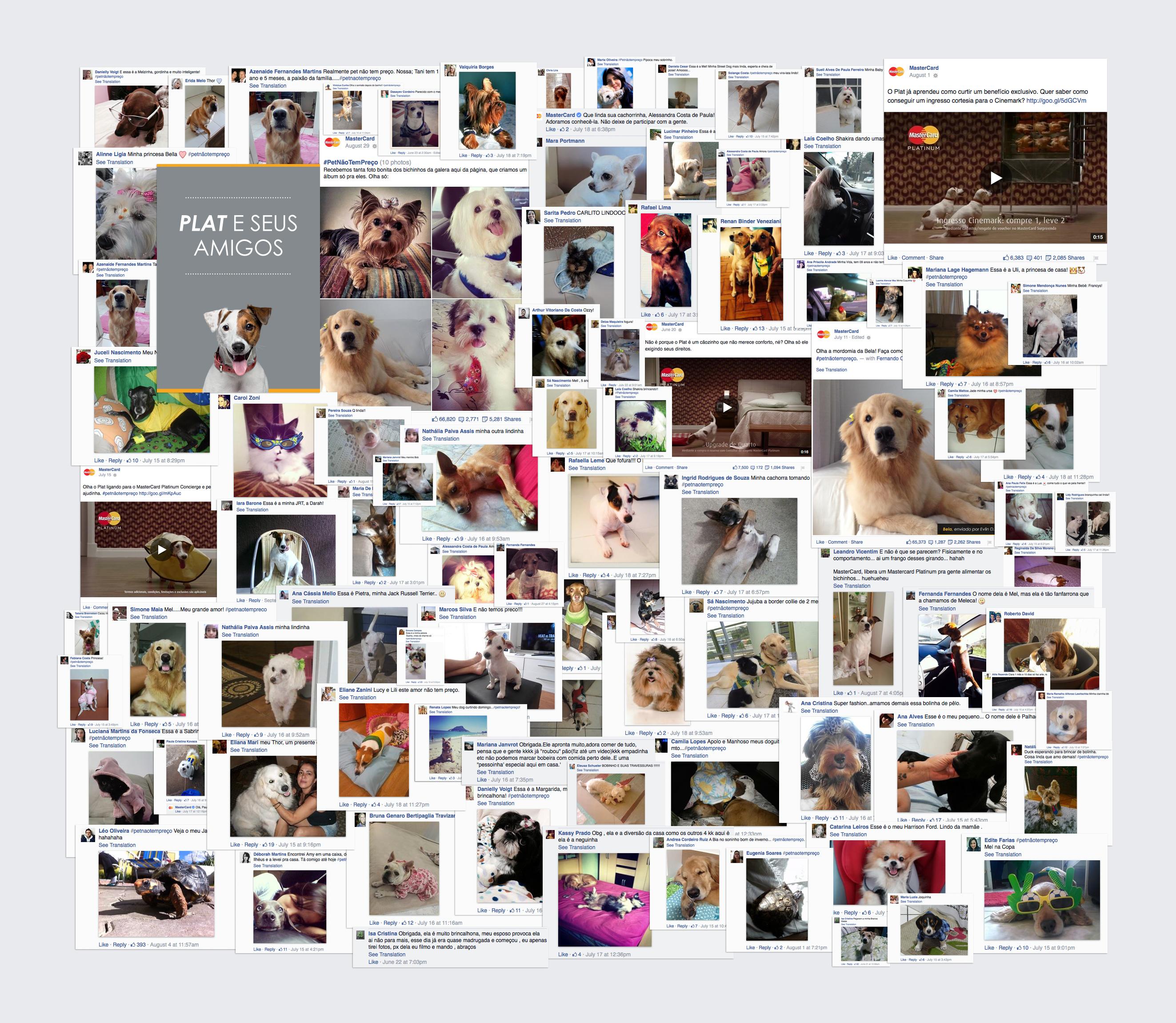 dogs enviados